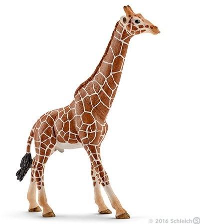 Schleich Giraffe, male