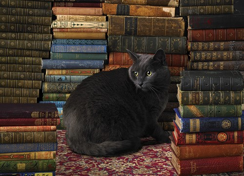 Cobble Hill puzzle 1000 pieces - Library Cat